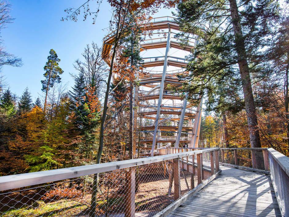 Sentier en bois, au pied de la tour
