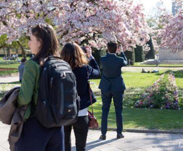 Les Magnolias de la Place de la République, stars des selfies 14