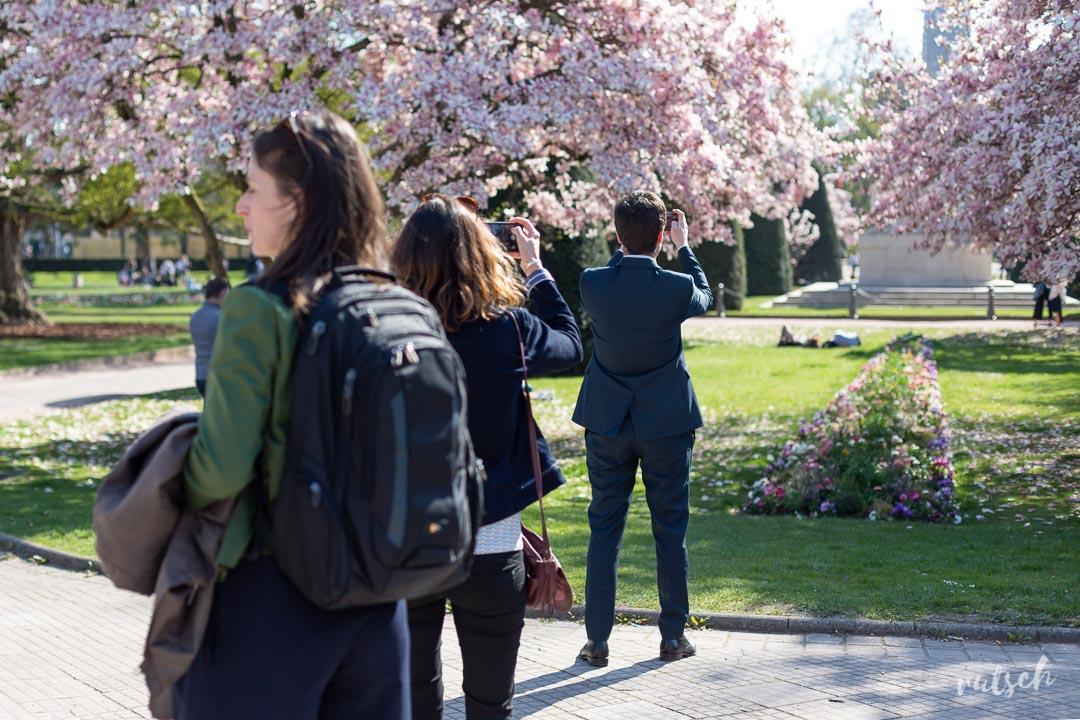 Les Magnolias de la Place de la République, stars des selfies 6
