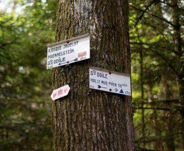 Randonner sans voiture : le Mont Sainte-Odile 13