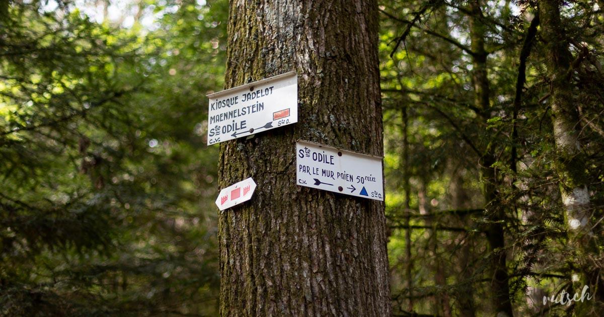 Randonner sans voiture : le Mont Sainte-Odile 5