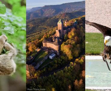 Montagne des Singes | Haut-Kœnigsbourg | Volerie des Aigles