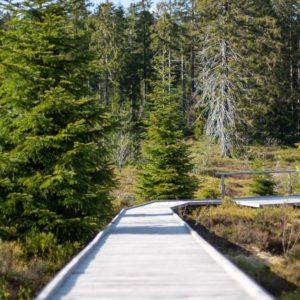 Idée rando en Forêt-Noire : le sentier du Lothar