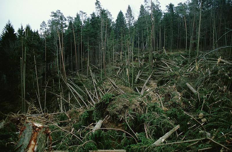 Une forêt du Bade-Wurtenberg après la tempête.