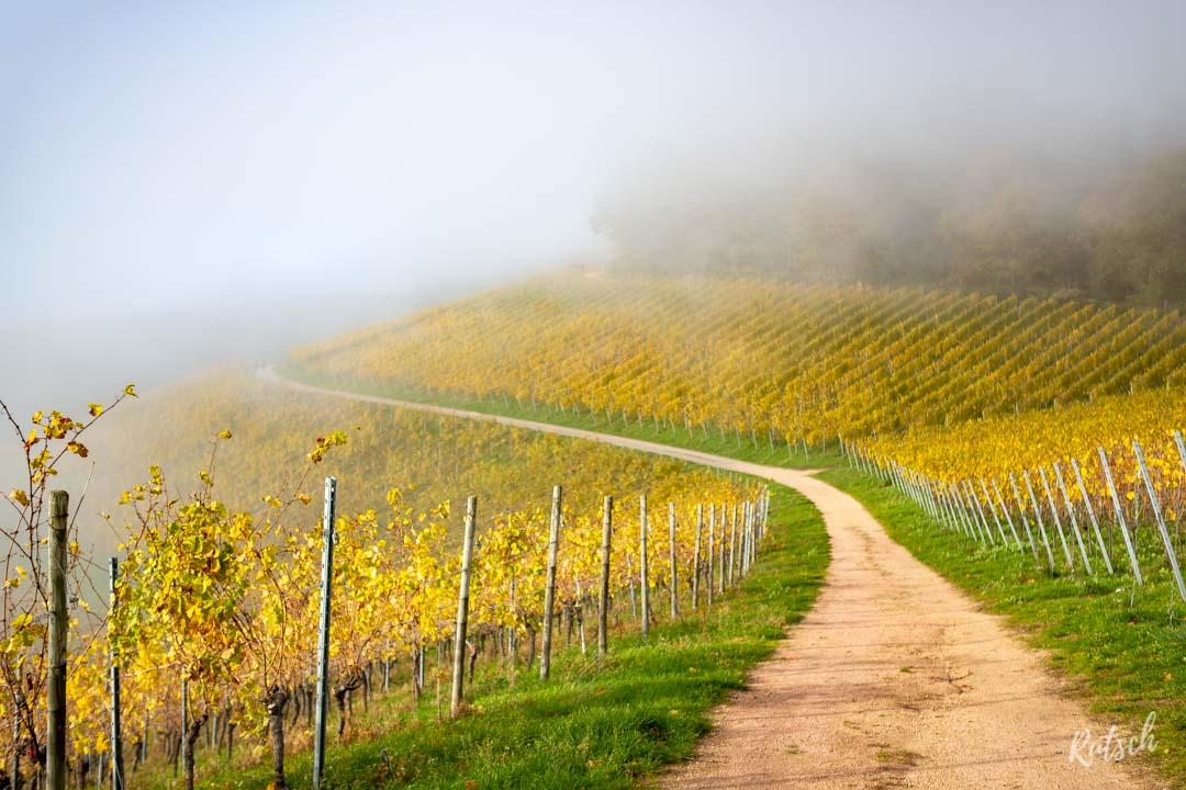 Vignoble de Durbach
