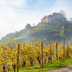 Le château Staufenberg, paradis viticole près de Strasbourg