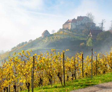 Le château Staufenberg, paradis viticole près de Strasbourg 11