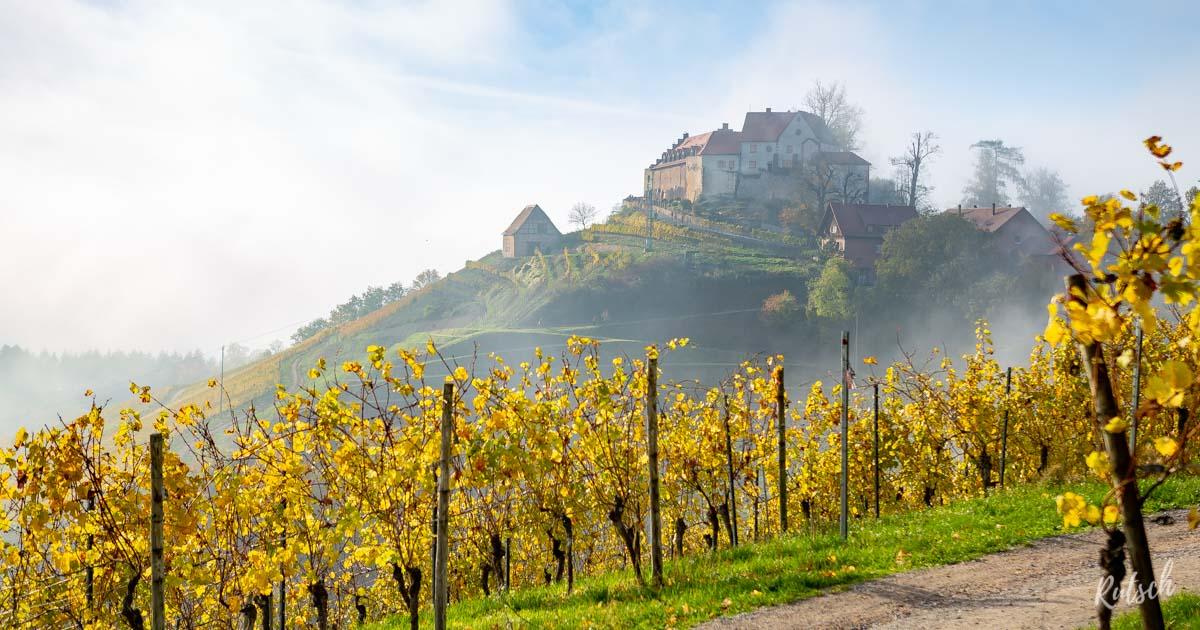 Le château Staufenberg, paradis viticole près de Strasbourg 10