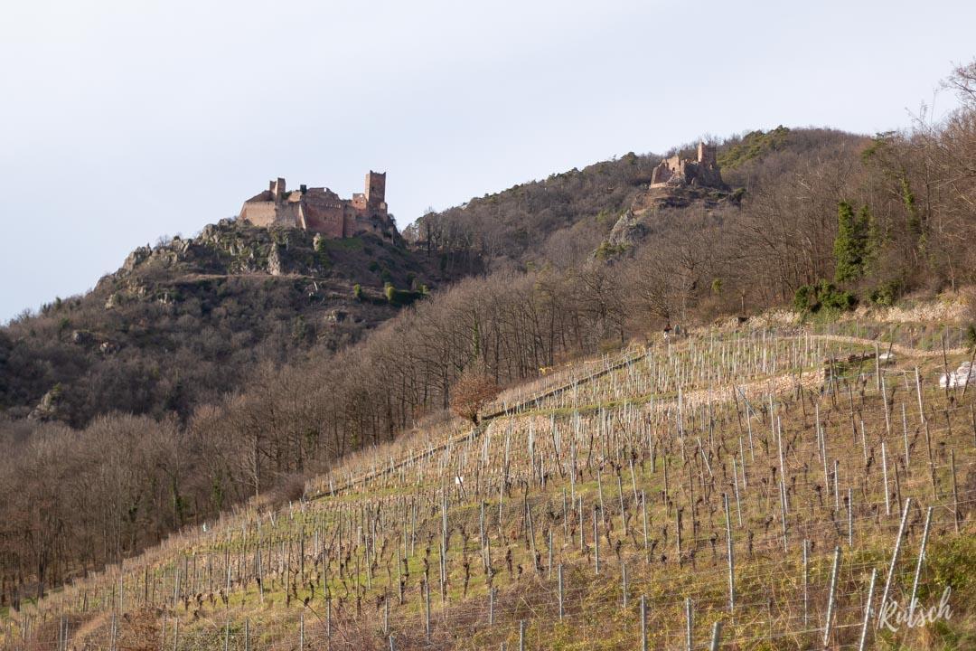 Château de Saint-Ulrich et Girsberg, Ribeauvillé
