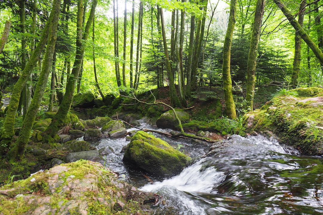 Ruisseau près de Sewen