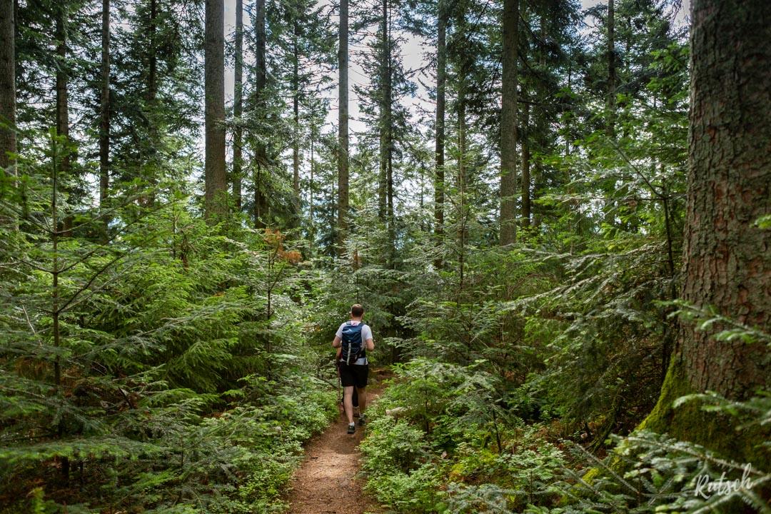 Forêt d'Ottenhöfen