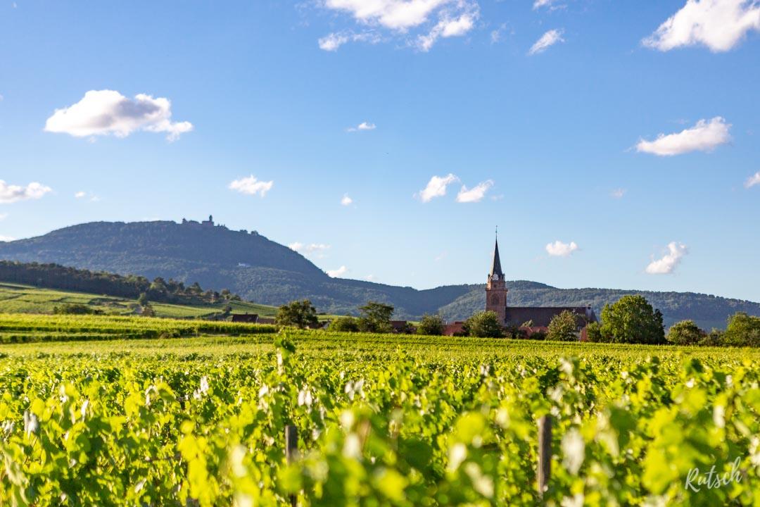 Route des Vins d'Alsace velo - EuroVelo5 - Bergheim