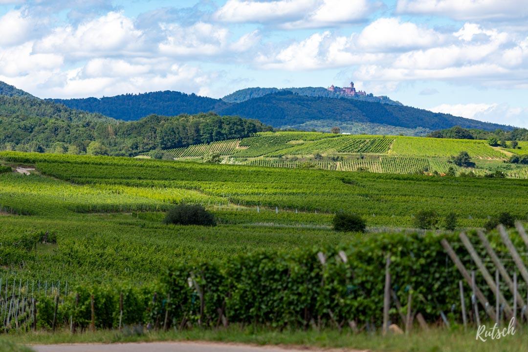 Route des Vins d'Alsace velo - EuroVelo5 - Haut Kœnigsbourg