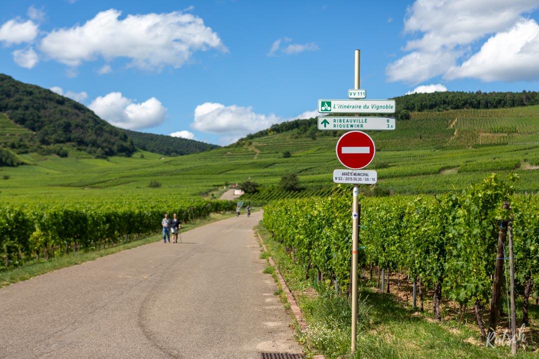 Route des Vins d'Alsace velo - VV111