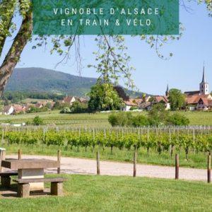 Vignoble d'Alsace en train+vélo : Mittelbergheim et Andlau