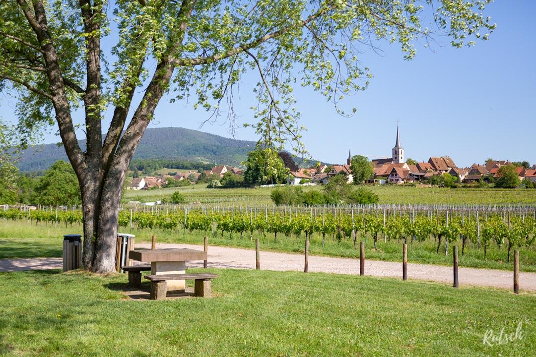Route des Vins d'Alsace velo - Aire de repos Mittelbergheim