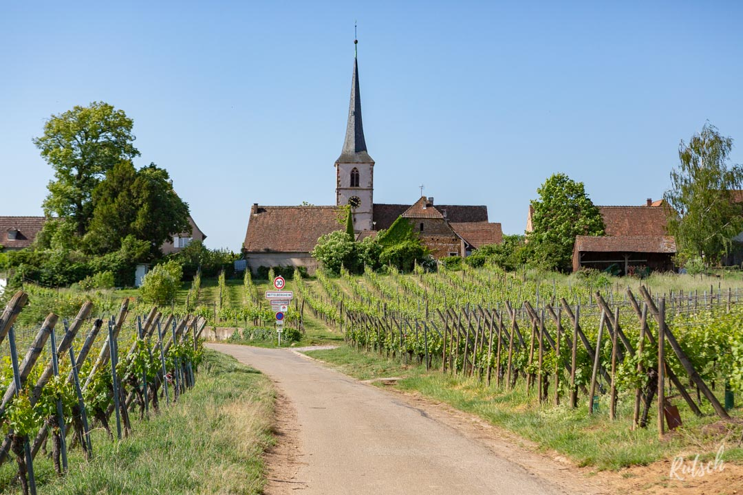 Route des Vins d'Alsace velo - EuroVelo5