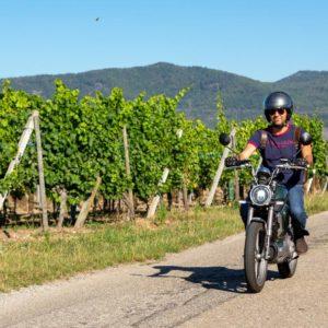 Balade à moto électrique sur la Route des Vins d'Alsace