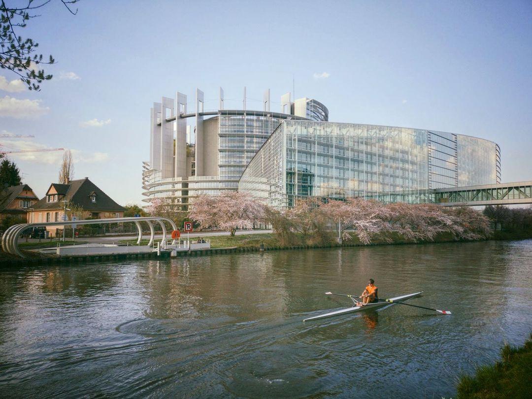 Cerisiers japonais du Parlement Européen
