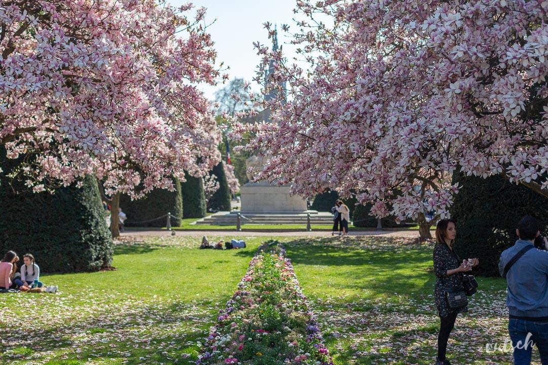 Place Republique Strasbourg Magnolias